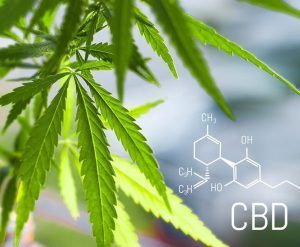 cannabis cbd1 1024x638 300x247 - High Hype: Should You Try CBD?